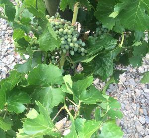 Mas Sinen Celler Burgos Porta organic viticulture wine tour