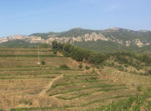 vineyards in Priorat