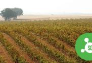 IBTW sulphites in wine